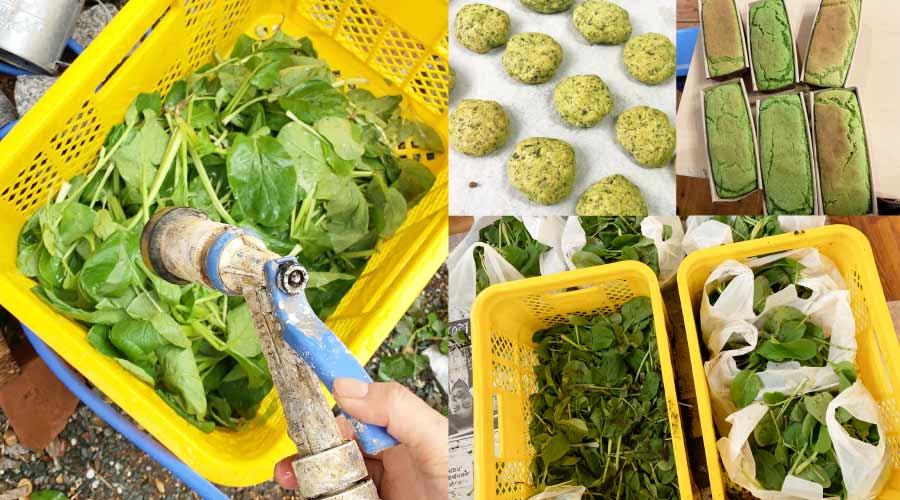 サンクスリバイバル野菜のイメージ